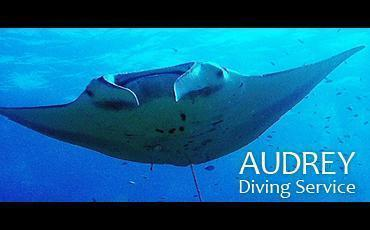 AUDREY Diving Serviceのイメージ